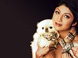 Shilpa Shetty - shilpa_shetty_015.jpg